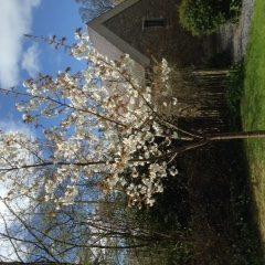 Blossom Apr16